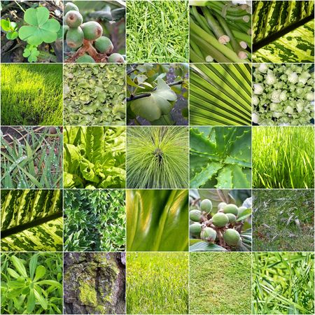 Variety of green vegetation details  photo