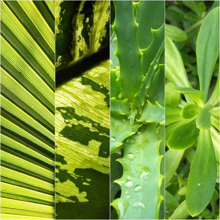 Variety of green vegetation foliages