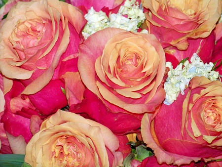 Pink and orange roses romantic wedding or Valentines bouquet photo