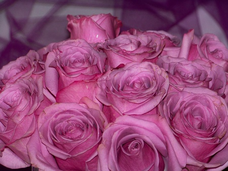 Wedding bouquet of pink roses closeup photo