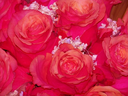 magentas: Intense pink roses petals and flowers delicious smelling background