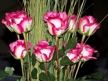 fuchsias: Variegato bicolore pink and white roses bouquet flowers arrangement for a wedding