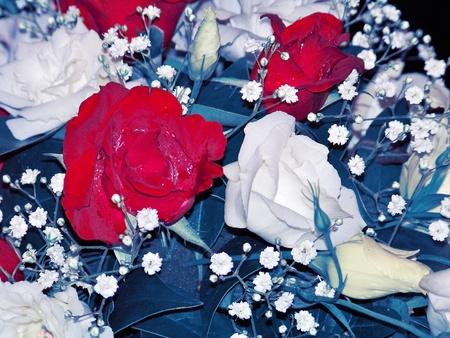 Close up to Carnations flowers arrangement in red white and blue, northamerican colors photo