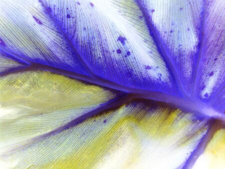 White, indigo purple and yellow natural texture background