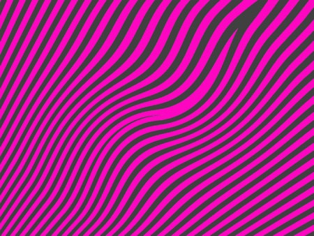 fuchsia color: Funky contrast in female zebra waves in pink and black Stock Photo