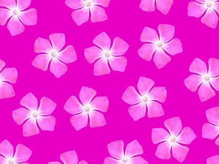 magentas: Pink flowers pattern over fuchsia backdrop