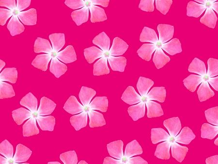 magentas: Magenta background with pink flowers pattern