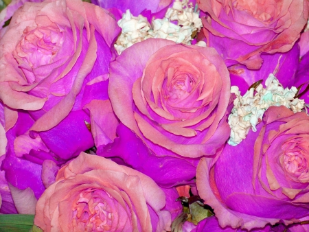 magentas: Pink roses bouquet for valentines day