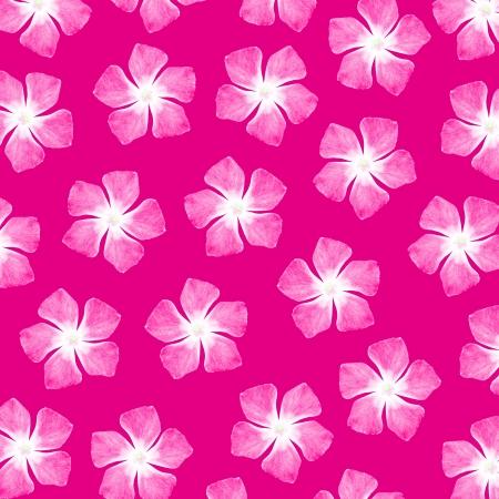 magentas: Femenine pink flowers over fuchsia background