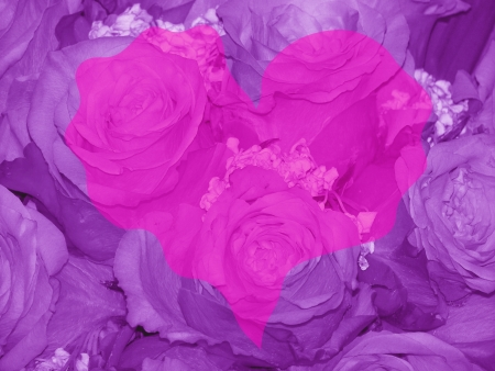 quivering: Pink valentines heart over purple roses background