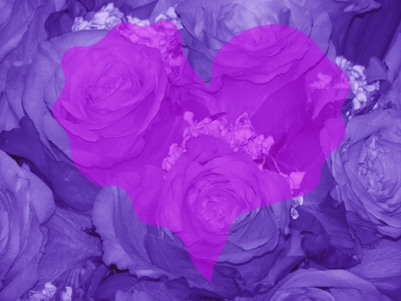 Romantic purple background with roses and a trembling heart