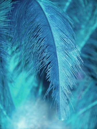 cian: Cian blue light feather background
