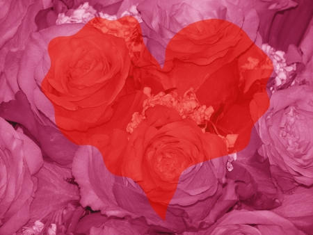 quivering: Red valentines heart over pink roses background Stock Photo