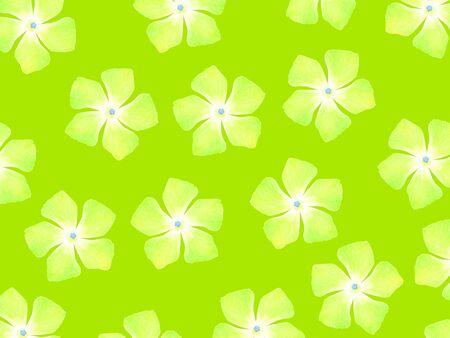 Light green flowers over green apple backdrop Stock Photo - 17115781