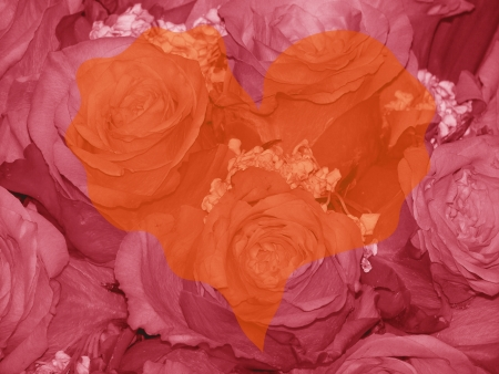 quivering: Orange heart shape over redish sepia roses background Stock Photo