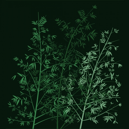 Sober elegant green bamboo silhouettes at night
