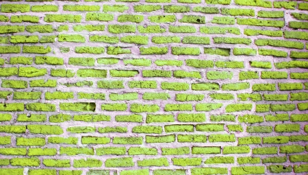Light green colored brick wall texture background photo