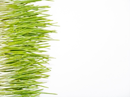 Horizontal isolated green grass background photo