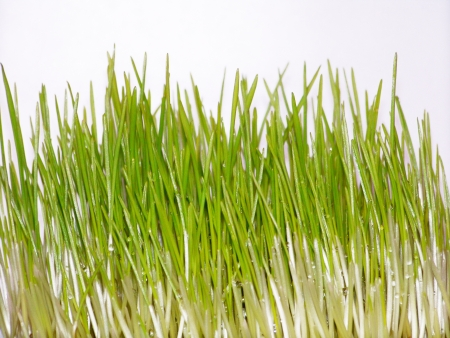 Green grass closeup background on white photo