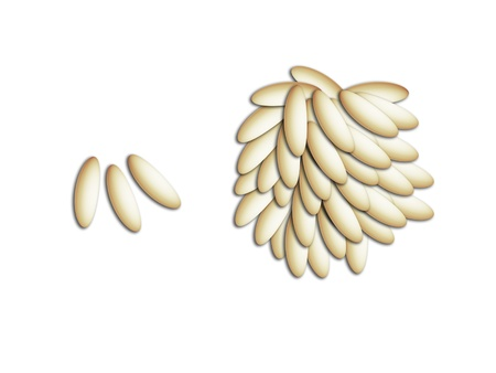 Comparative conceptual image of misery and abundance with rice grains illustration on white Stock fotó