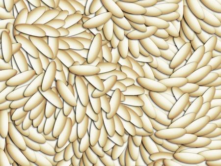 Seeds illustration texture background, alpist birdseeds, rice grains or golden linseeds