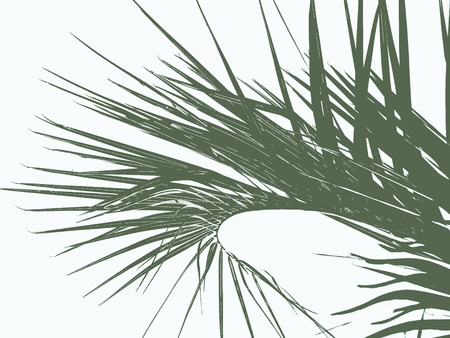 Green palm leaves on a branch close-up isolated on white