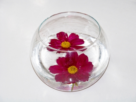 spheric: Couple of red natural flowers floating on water in a spheric glass container for christmas ornament isolated on white background Stock Photo