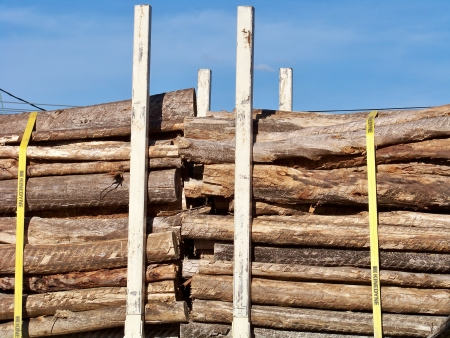 Trunks logs stacked on truck transport for sell