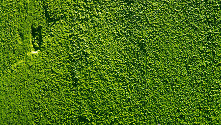 dark green: Dark green paint on concrete wall close up background