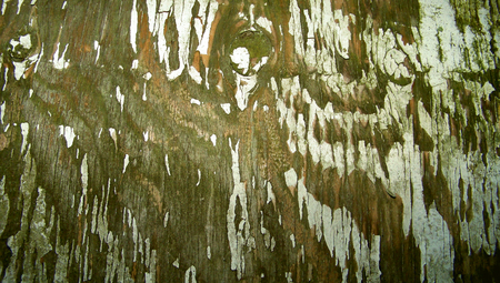 Old grunge wood paint cracks backdrop Stock Photo