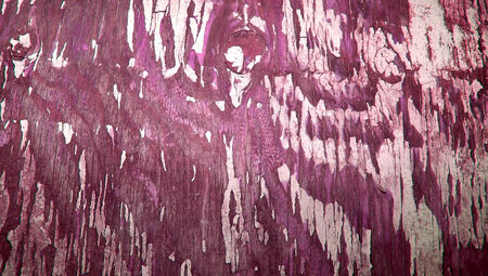 knothole: Pieces of old paint on wood abstract background in purple