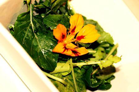 plato de ensalada: Flor comestible en ensalada de r�cula verdes placa de cerca Foto de archivo