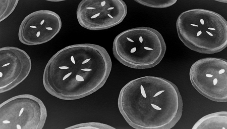 bn: Fruit slices dark paint in black and white background