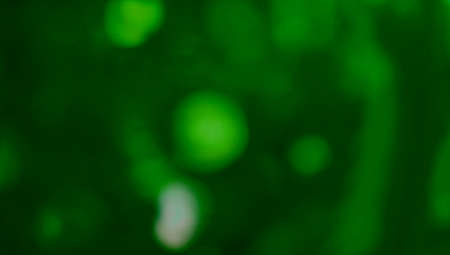 xmas background: Green xmas blurs abstract background