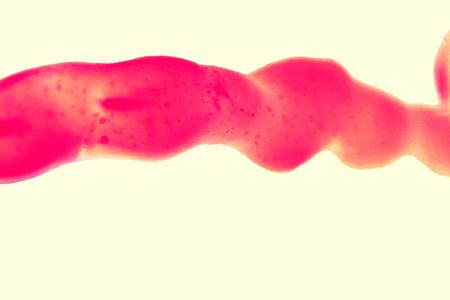 赤色の静脈または臍帯をクローズ アップ ホワイト バック グラウンドの分離