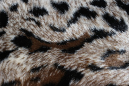 spotted: Leopard spotted abstract background