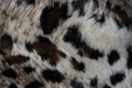feline: Feline fur abstract background Stock Photo