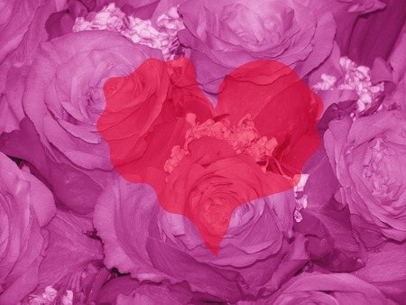 Trembling heart on elegant roses pink background 스톡 콘텐츠