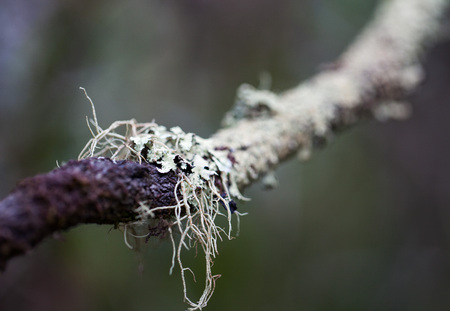 Closeup photo mossy dead tree trunk and branch. Macro photo.