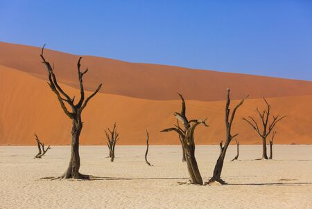 Silhouettes of dry hundred years old trees in the desert among red sand dunes. Unusual surreal alien landscape with dead skeletons trees. Deadvlei, Namib-Naukluft National Park, Namibia. Namib desert