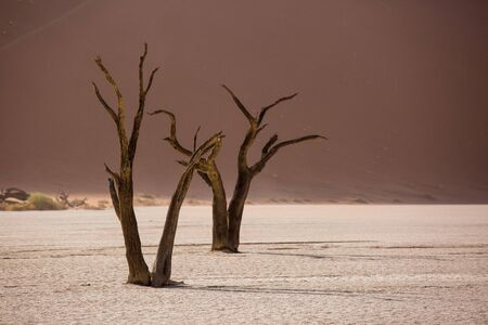 Silhouettes of dry hundred years old trees in the desert among red sand dunes and whirlwind. Unusual surreal alien landscape with dead skeletons trees. Deadvlei, Namib-Naukluft National Park, Namibia.
