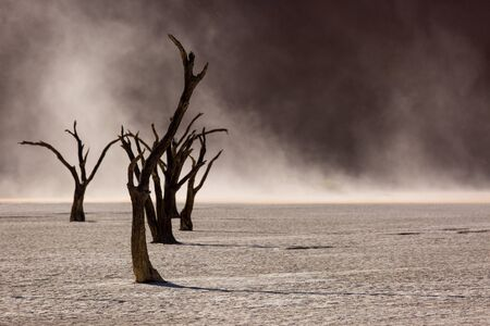 Silhouettes of dry hundred years old trees in the desert among red sand dunes. Unusual surreal alien landscape with dead skeletons trees. Deadvlei, Namib-Naukluft National Park, Namibia. Namib desert.
