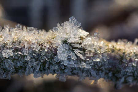 Brilliant hoarfrost on the branches and on green and yellow frozen autumn leaves. Natural snow crystals in winter.