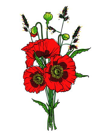 Poppies isolated on white, hand drawn vector illustration