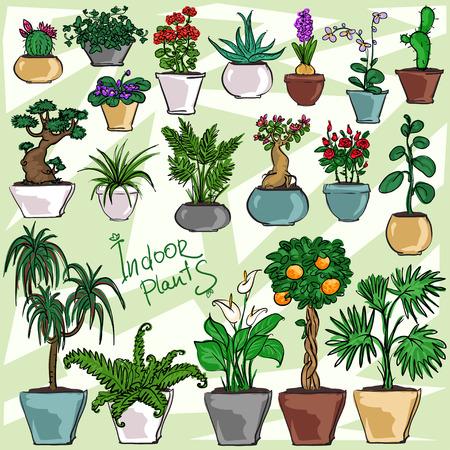 観葉植物のセット、手描きコレクション