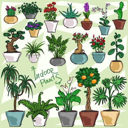 aloe vera plant: Set of Indoor Plants, hand drawn collection