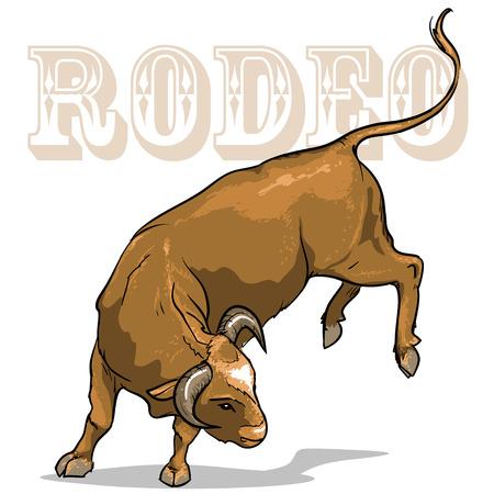 bucking bull: Rodeo Bucking Bull,  Isolated on white background