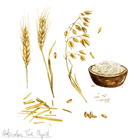 oat: Watercolor Food Clipart - Baking. Isolated Stock Photo