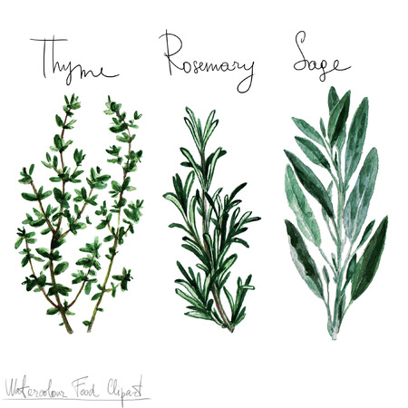 flavour: Watercolor Food Clipart - Herbs