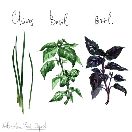 chive: Watercolor Food Clipart - Herbs